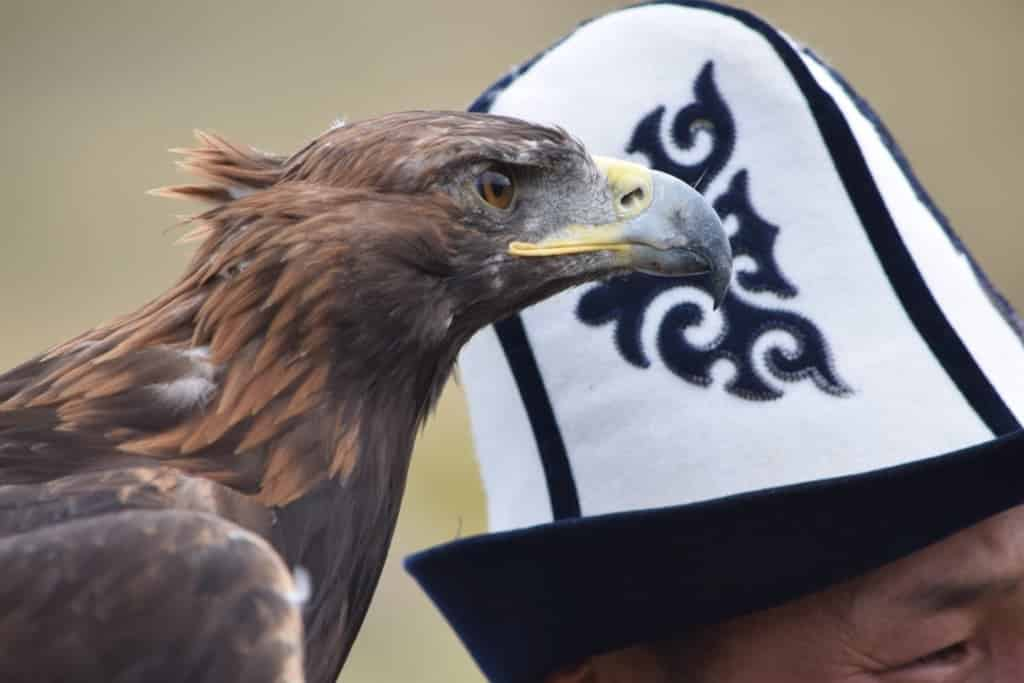 eagle hunter 5
