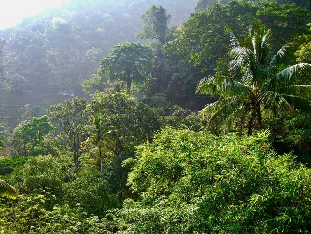 Visit Tamil Nadu: The lush mountain landscapes of the Western Ghats