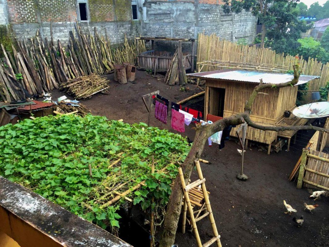 The farmyard outside my window in Bajawa