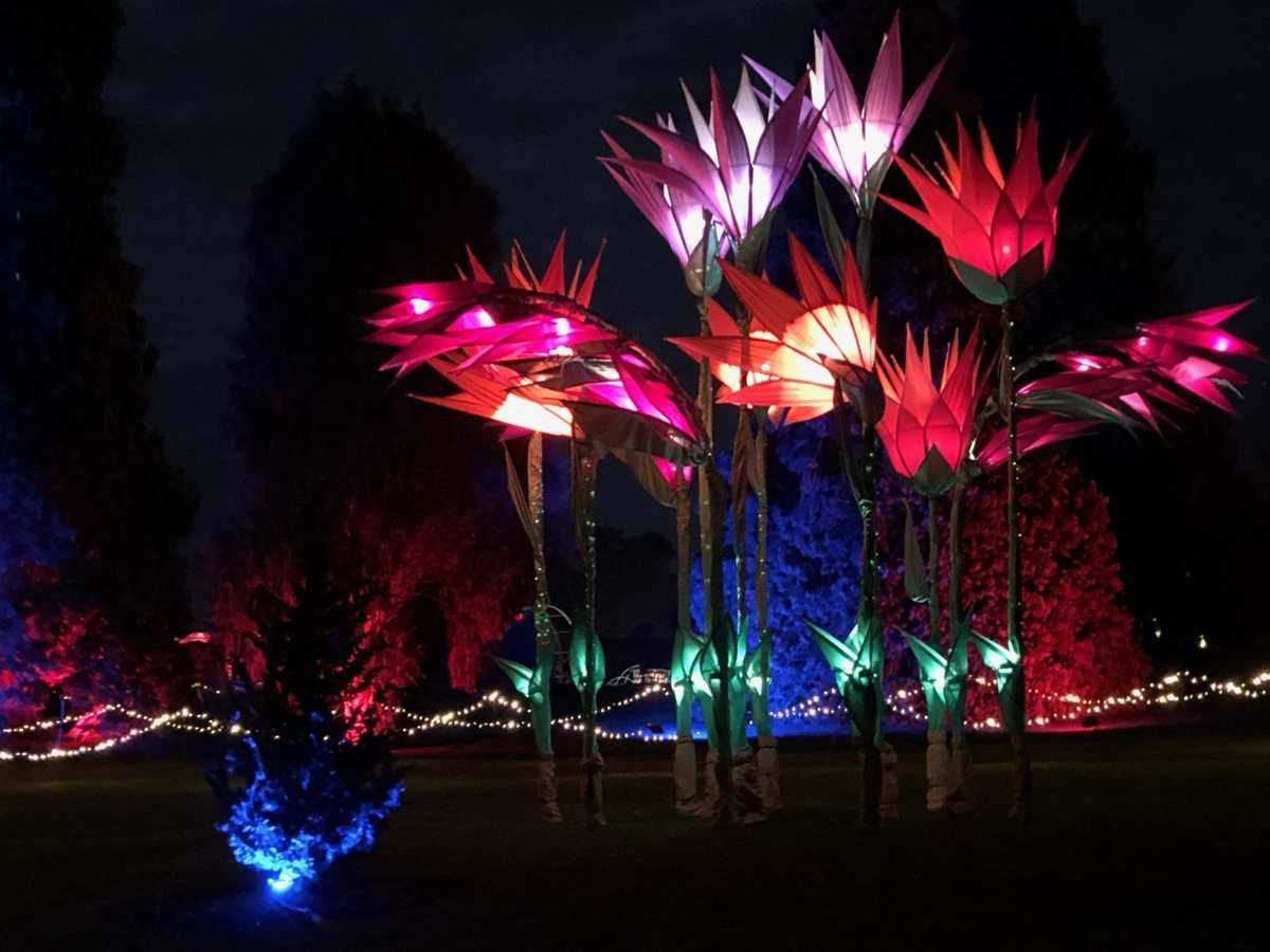 Rhs Wisley Christmas Glow A Perfect London Festive Outing Reading The Book Travel