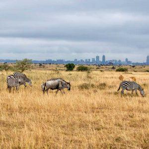 Djoudj National Bird Sanctuary - Safari