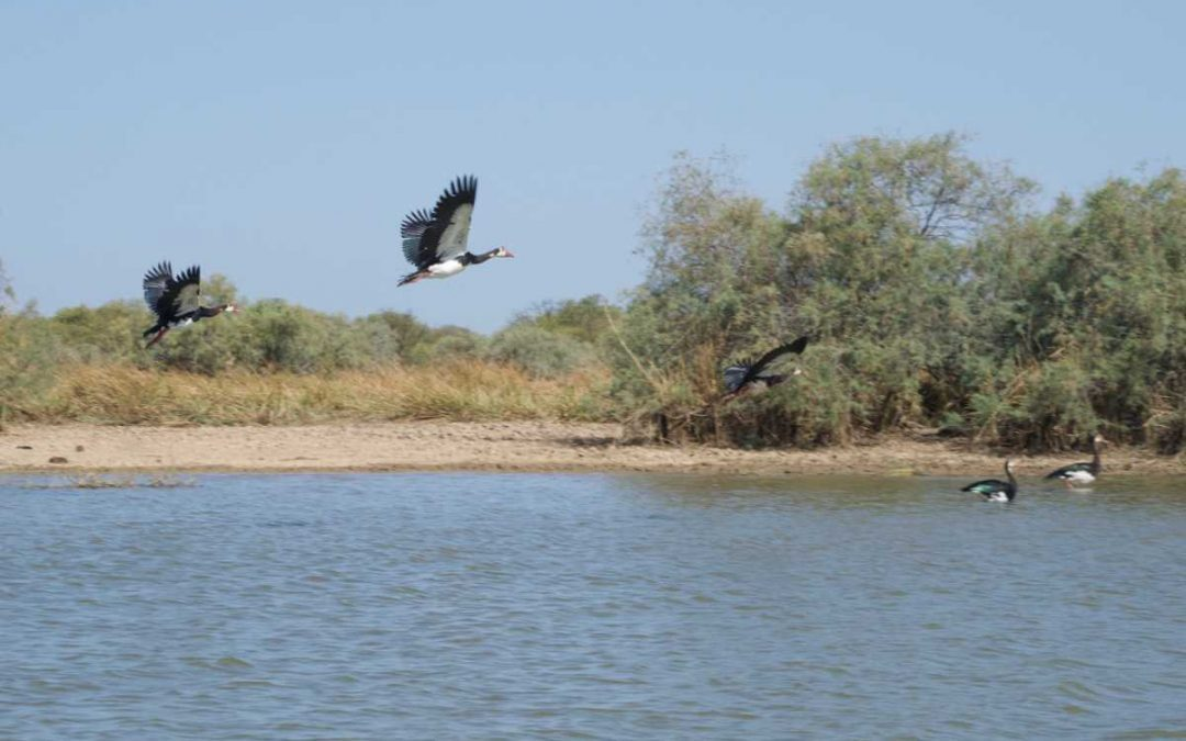 Djoudj National Bird Sanctuary and the Langue de Barbarie: The best Senegal bird watching tours