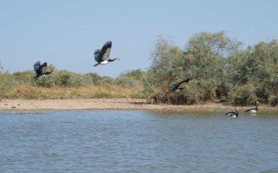 Djoudj National Bird Sanctuary and the Langue de Barbarie: The best Senegal bird watching tours