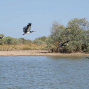Djoudj National Bird Sanctuary - Langue de Barbarie